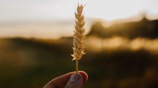 Wheatのトップページ